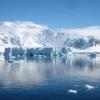 Антарктида: тварини, що живуть на крижаному континенті