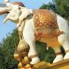 Білі слони в таїланді: фото і опис