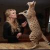 Великі кішки савани: опис і фото