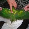 На що хворіють папуги?