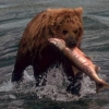 Чим харчується ведмідь?