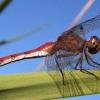 Чим харчуються бабки і їх личинки