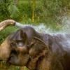 Що може слон?