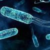 Що таке бактерії?