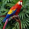 Що таке папуга?