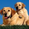 До якого віку ростуть собаки?