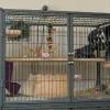 Домашні вихованці: клітина для шиншили