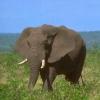 Де живуть слони?