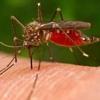 Цікаво, а чому комарині укуси сверблять?