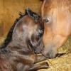 Цікаво, скільки років живуть коні?