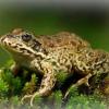 До чого сниться жаба?