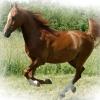 До чого сниться кінь?