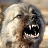 До чого сниться зла собака?