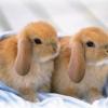 До чого сняться кролики?
