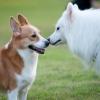 Як кажуть собаки?
