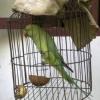 Як купити папугу?