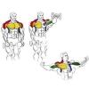 Як накачати грудні м`язи гантелями: вправи і поради