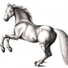 Як намалювати коня олівцем поетапно. Вчимо дитину малювати гарного коня