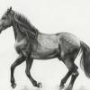 Як намалювати коня: чи зможе кожен!