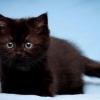 Як назвати чорне кошеня-хлопчика?