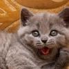 Як назвати кота-хлопчика?