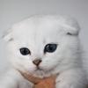 Як назвати кошеня хлопчика?