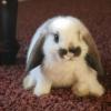 Як назвати кролика?