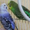 Як назвати птицю?