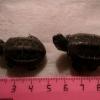 Як визначити вік черепахи
