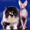 Як підстригти кішку?