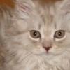 Як прикольно назвати кота?