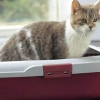 Як привчити кішку до лотка?