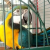 Як доглядати за папугою?