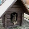 Як утеплити будку для собаки