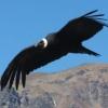 Яка птах найбільший?
