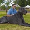 Яка найбільша порода собак