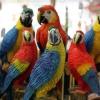 Які є папуги?