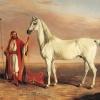 Кращі арабські скакуни (фото)