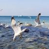 Морські птахи: назви, опис і фото