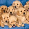 Чи можна завагітніти від собаки?
