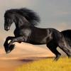 Мустанг (кінь): опис породи і фото