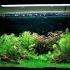 Чи потрібен фільтр в акваріумі?