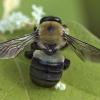 Бджоли-теслі завелися в домі. Як позбутися?