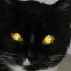 Чому у кішок світяться очі?