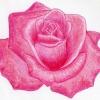 Покроковий урок: як намалювати троянду
