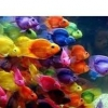 Риба-папуга в акваріумі