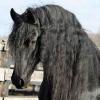 Найдорожча кінь у світі (фото). Найдорожчі коні в світі: топ 10