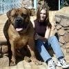 Найбільші собаки в світі