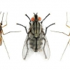 Скільки живуть комарі в природі?