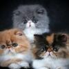 Скільки живуть коти або як дізнатися котячий вік